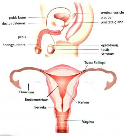 Artikel BKKBN : Kesehatan Reproduksi Balita